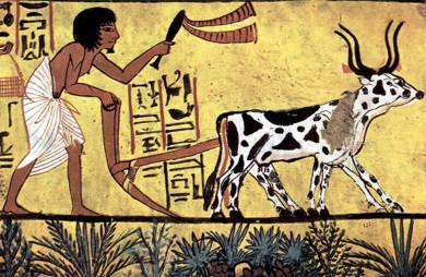 ploughing-egypt